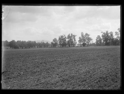 Work of fall army worm at Clark's Farm on Tates Creek Pike in Lexington, Kentucky. 9/28/1921