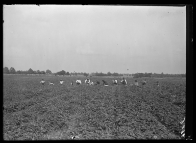 Strawberry picking at Foley's place-Clay's Mill Road. 4/30/1905