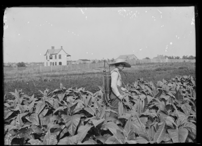 Tobacco sprayer at Plot Experiment Farm. 7/25/1902