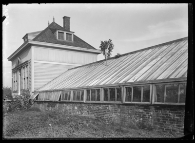 Puerto Rican tobacco growing thru the roof of viv., planted spring of 1903. 10/19/1904