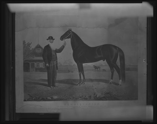 Hambletonian; painting of horse