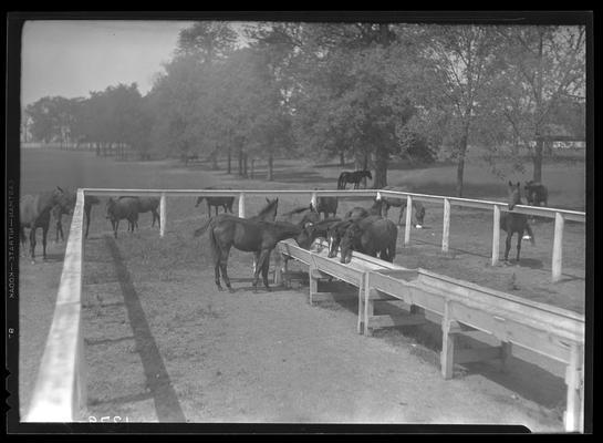 Horse Farm Scenes, Walnut Hill; horses eating from trough