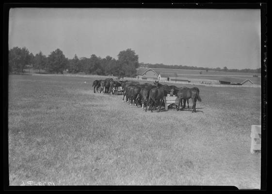 Horse Farm Scenes; Walnut Hill