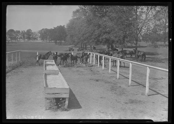 Horse Farm Scenes, Walnut Hill; horses in corral