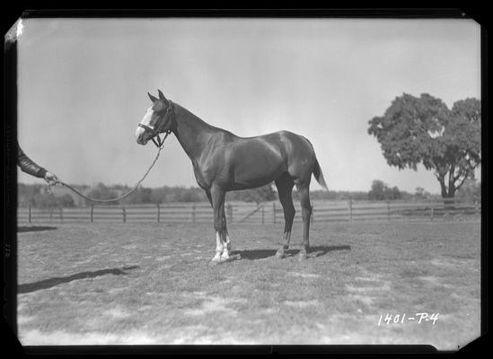 Ed Madden; Hamburg Place, horse