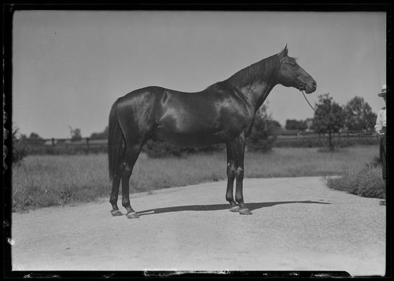 Man and horse; Sir Gallahad