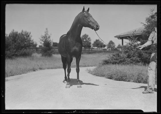 Man and horse (Sir Gallahad)