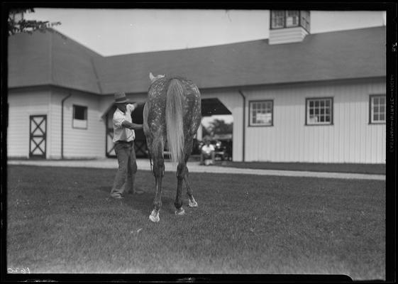 Royal Minstrel (horse)