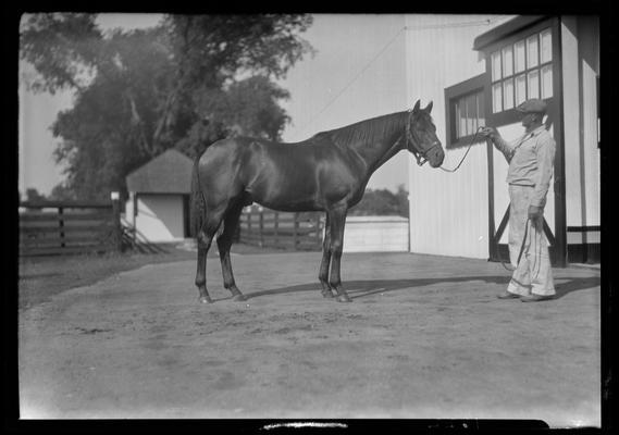 Twenty Grand (horse)