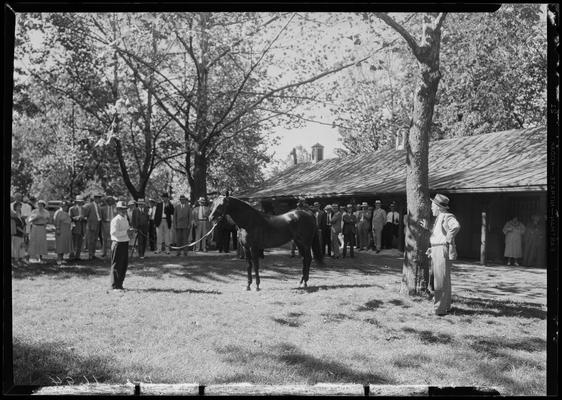 Walnut Hill Farm; horse and crowd
