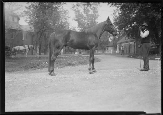 Mr. Jones; at fairgrounds with horse