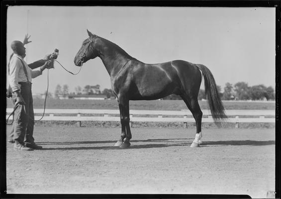 Mrs. McCourtice; horse, Mr. McElwyn