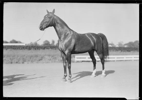 McCourtice, Mrs.; horse, Mr. McElwyn