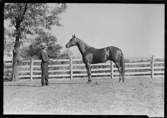 Calumet Farm; man and horse