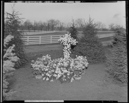 Roxie Highland; horse burial, Spindletop Farm; grave with flowers