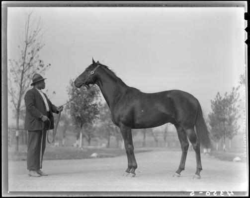 Will Harbut with War Admiral (horse)