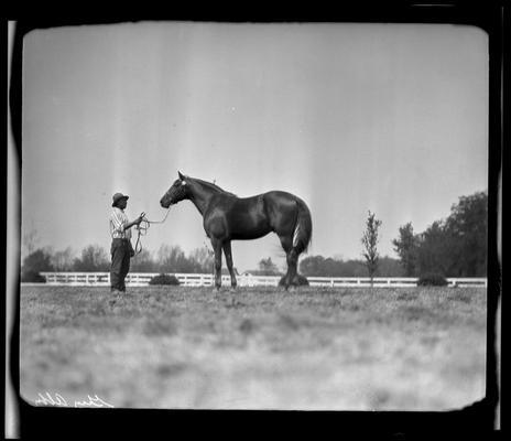 Calumet Farm; horse and handler