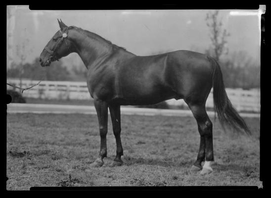 Peter the Brewer, Truax; horse