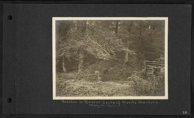 Small wooden structure to right, notation                          Beeches in Ravine South of Moritz Mountains. May 14, 1907