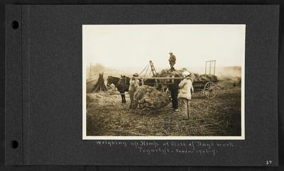 Cart of hemp with man standing on top, two horses drawing cart, two men holding a bundle of hemp hung off wooden plank, man observing, notation                          Weighing up Hemp at Close of Day's work. Forgarty's - season 1906-7