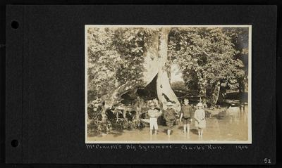 Three young boys, two wearing hats, and one young girl wearing a hat, standing in a creek in front of large tree, notation                          McConnell's Big Sycamore - Clark's Run 1906