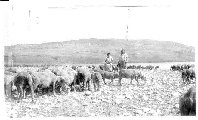 A Native American man and woman with a herd of sheep.  Handwritten note on back of photo