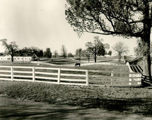 Horse Farms and Owners; Unidentified; Horse farm