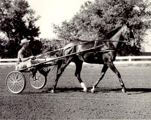 Horse Industry; Unidentified; Man being pulled by a horse