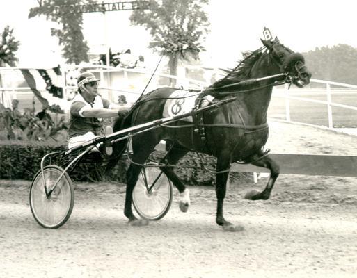 Horses; Abe's Hope; Bret Hanover; Horse #8, Alert Bret, pulling a cart