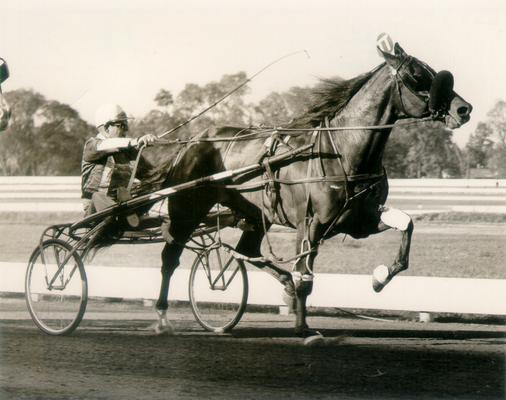 Horses; Buck Passer; Elizabeth; Effrat Hanover running a trial in 1967
