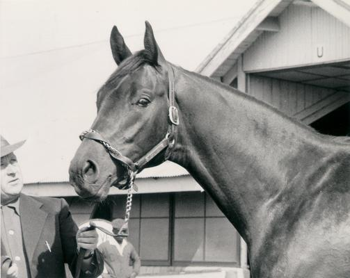 Horses; Great Redeemer; Judger; Iron Liege at the KY Derby in 1957