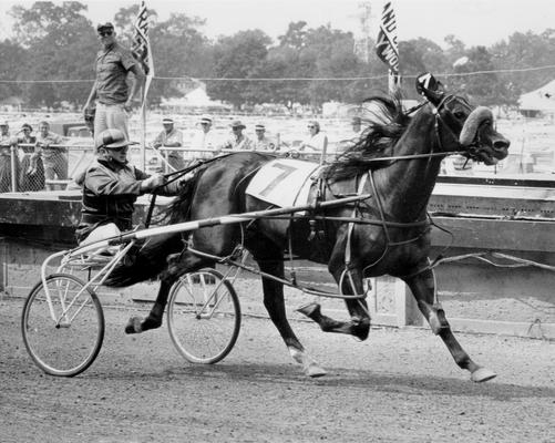 Horses; Harness Racing; Race Scenes; Horse and driver (Unidentified)