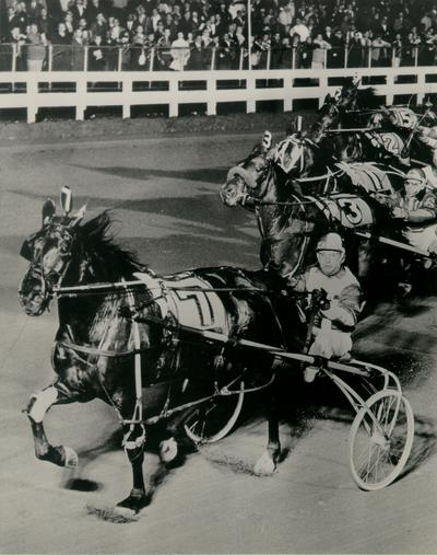 Horses; Harness Racing; Race Scenes; Horse #7 leads the pack