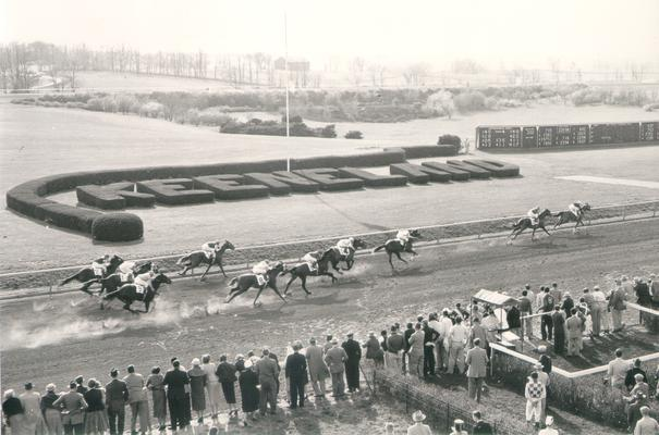Horses; Thoroughbred Racing; Race Scenes; Horses racing past the Keeneland topiary