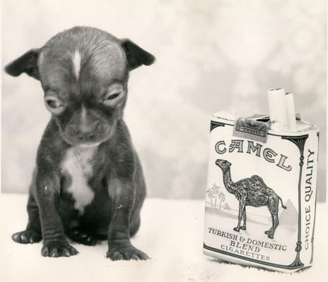 Animals; Dogs; Newborn puppy sitting next to a pack of cigarettes (to provide scale)