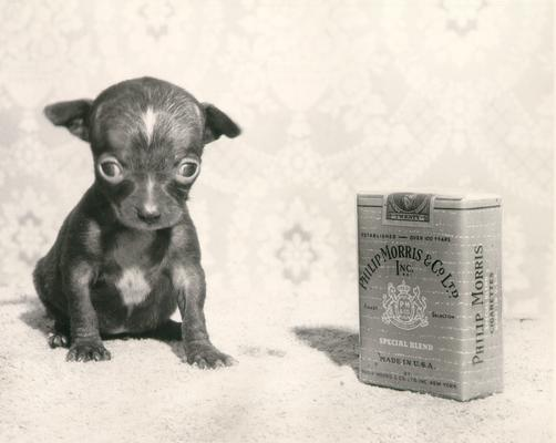 Animals; Dogs; Puppy in #121 is compared to a pack of Phillip Morris cigarettes in scale