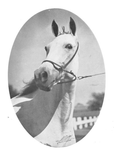 Horse; Related items and photos of a bed; A white horse