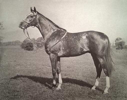 Horse; Individual; Horse with white legs