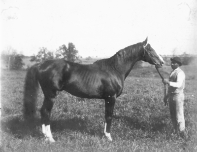 Posed photo; African American man holding a horse by a bridle. Silver Print