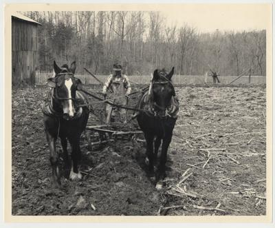 An unidentified man is plowing a field using mules