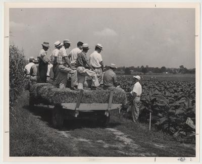 W. D. Valleau, the lecturer and Roy Beatty Smith, Jr. from Shelbyville standing on the wagon and wearing a checkered cap, viewing a tobacco field at the University of Kentucky Agronomy Field Day, Princeton Substation