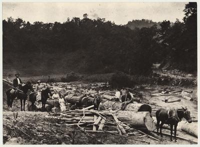 A postcard showing logging tram road on Ball Creek at the mouth of Terry, Knott County, Kentucky
