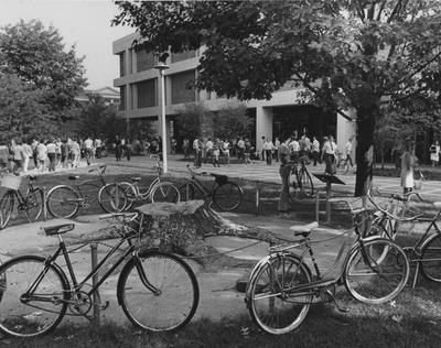 Bicycles parked around the ancient tree stump in front of the White Hall Classroom Building