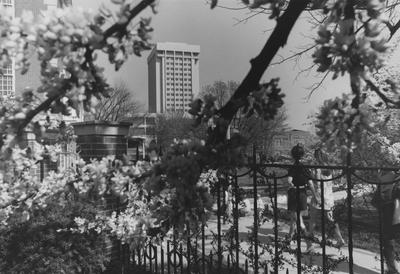 This photo was taken from Maxwell Place during the Spring; On the left is the Margaret I. King Library and White Hall Classroom building and Patterson Office Tower can be seen in the background
