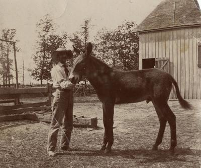 James Russell Jenness, Jr. with a mule