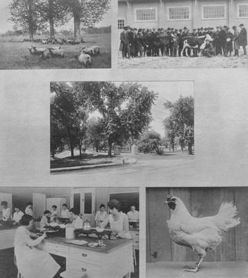 A composite of several images from the Agriculture department, one being of a Home Economics class
