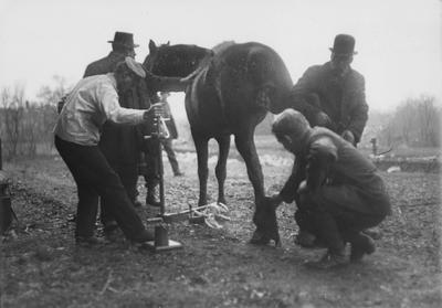 Men taking an X-Ray of a horse's foot for Sphar.  The X - Ray was most likely taken by Dr. Pryor