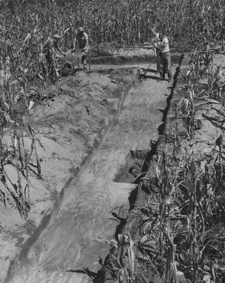 Anthropological research at Barkley Dam; Part of the research took place in this cornfield