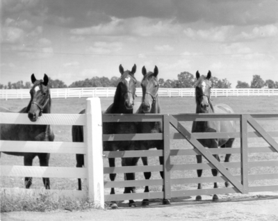 Four horses at a gate