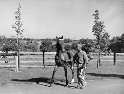 Horse and African-American  trainer,